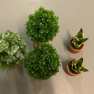 Fake Potted Plants for Sale in Deerfield Beach, FL