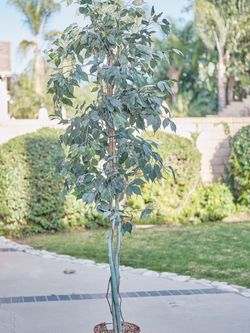Large Faux Tree for Sale in Santa Ana,  CA