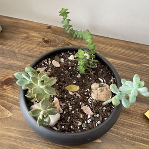 Succulents And Pot for Sale in Frederick, MD