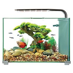 Fish Tank for Sale in Riverview,  FL