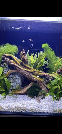 2 Beautiful Fish Tanks Available for Sale in Portland,  OR