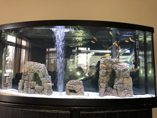 72 Gallon Bowfront Aquarium For Sale In Dearborn Heights Mi Offerup