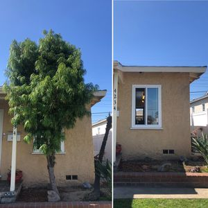 Tree & palm trimming + removal for Sale in Torrance, CA