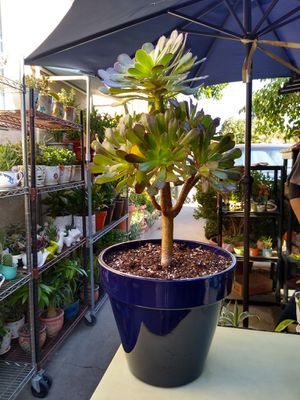OUTDOOR PLANT for Sale in Paramount, CA