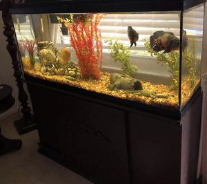 Fish 🐠 tank 55 gallons everything including but 🐠 for Sale in FL, US