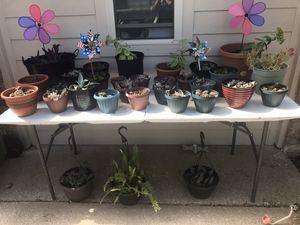 Plants plants plants. for Sale in Arlington, TX