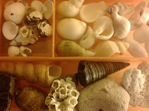 Shell and Sea Glass Collection for Sale in Seattle, WA