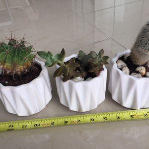 Succulent and Cacti Plants in White Pot 3 for Sale in Miami, FL
