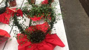 """Live Angel Vine Topiary Flower Plant Fit 6"""" Pot for Sale in Modesto, CA"""