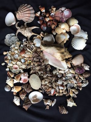 My shell collection for Sale in Seattle, WA