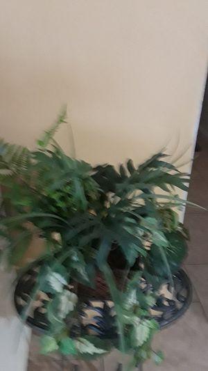 Fake plant. for Sale in Phoenix, AZ