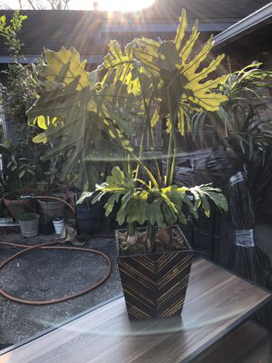 Medium-sized Artificial Fake Plant for Sale in Conroe, TX