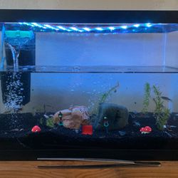 Fish tank for Sale in Madera,  CA