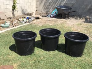 Dragon fruit 20 gallon pots for Sale in Westminster, CA