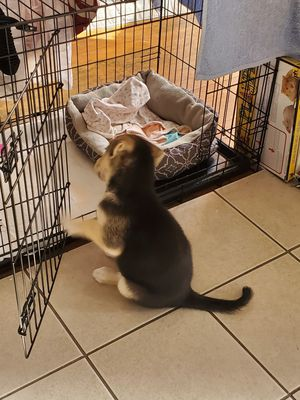 Dog Cage for Sale in North Providence, RI