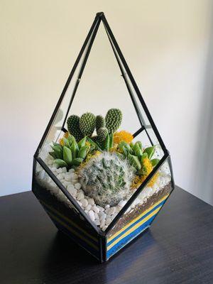 Geometric Combo Glass Terrarium for Sale in Hialeah, FL