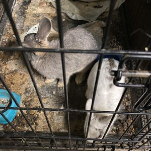 Bunnies And Kennel for Sale in Whittier, CA