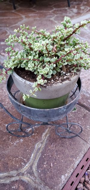 Live succulent plant in glazed pot for Sale in Henderson, NV