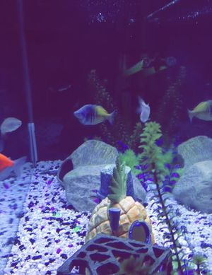 55 Gallons Fish Tank With Complete Decor Set for Sale in Annapolis, MD