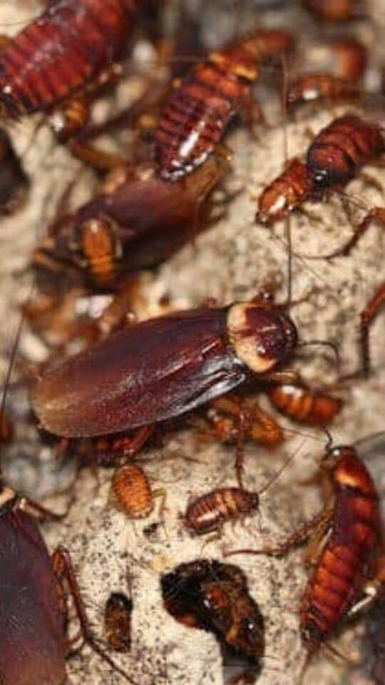 DONT LET YOUR WHOLE HOUSE GET INFESTED CONTACT US NOW