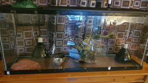 Reptile tank and accessories for Sale in Toms River, NJ