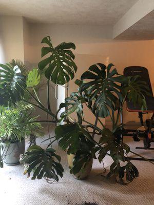 Plants for Sale in Woodbridge, VA