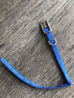 Small dog cat collar for Sale in Tampa,  FL