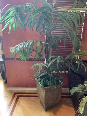 Large fake house plant for Sale in Bartlett, IL