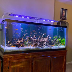 For Sale My Fish Tank 300g With Everything You See $2500.00 for Sale in Katy, TX