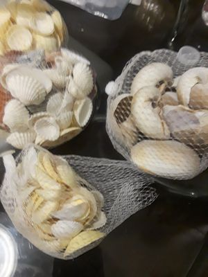Mix sea shells for Sale in Las Vegas, NV