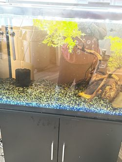 65 Gallon Fish Tank Set Up for Sale in Pittsburgh,  PA