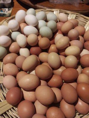 Organic eggs for Sale in Renton, WA