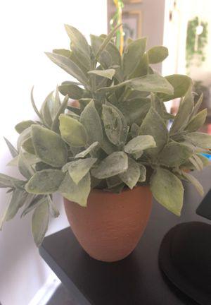Tiny cute decorating fake plant (new) for Sale in Arlington, VA
