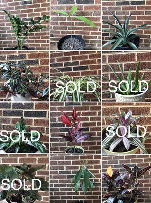 Houseplant. Sedum Plants and more for Sale in Springfield, VA