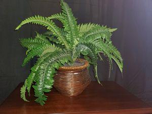 Fake fern faux plant for Sale in Winter Park, FL