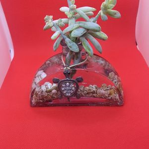 Turtle Tiny Vase Succulent for Sale in Manteca, CA