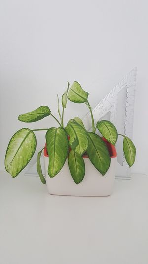 Decorative plant for Sale in Hollywood, FL