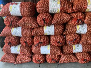 Chandler fresh walnut 2020 for Sale in Modesto, CA