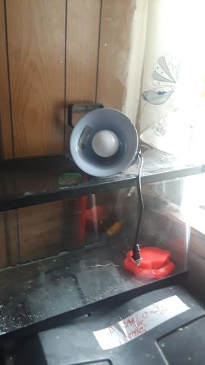 Snake tank with light for Sale in Buffalo, NY