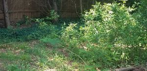 Ground clearing for Sale in McDonough, GA