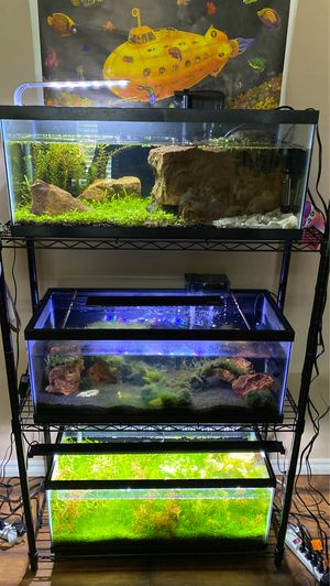 3 20 gallon long fish tanks for with rack for Sale in Oklahoma City, OK