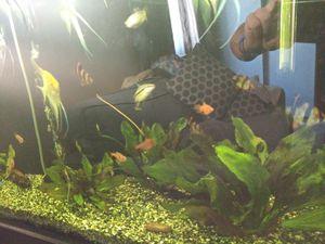 Aquarium and fish for Sale in Carmichael, CA