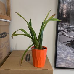 Potted Plant for Sale in Washington,  DC