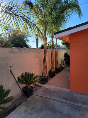 FREE Palm TREES 🌴 for Sale in Pico Rivera, CA