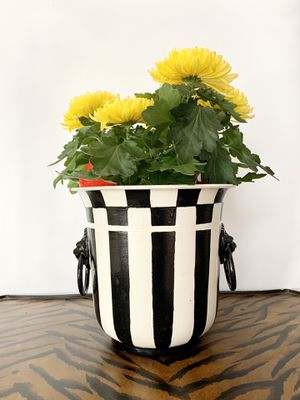 Courtly check black white striped hand painted metal planter bucket container lion handle rings lunar mum's new year chrysanthemum live flowers plant for Sale in Coral Gables, FL