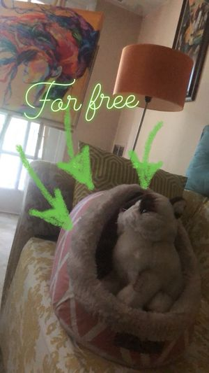 Cat cage for Sale in Fairfax, VA