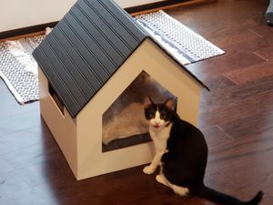 Pet bed/house for Sale in Kensington, MD