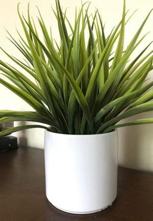 fake plant for Sale in Mentone, CA