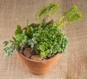 4-inch Succulent Pot for Sale in Las Vegas, NV