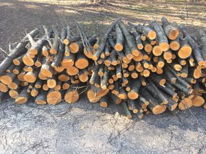 FREE Firewood and Tree bush for Sale in Gaithersburg, MD